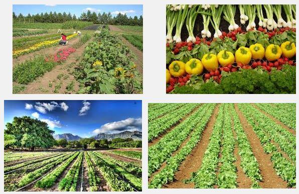 Mangiare Sano Agricoltura Biologica