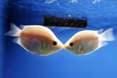 peces, beso, agua, océano, Anthony de Mello, religión, cuento, ética