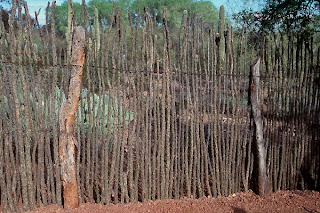 Ocotillo Cactus Fence This fence idea is a popular