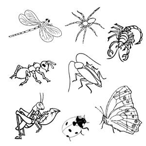 Desene De Colorat Cu Insecte  Albina  Fluturele  Buburuza  Calul De