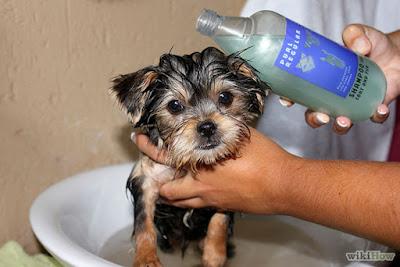 Truco bañar a tu perro
