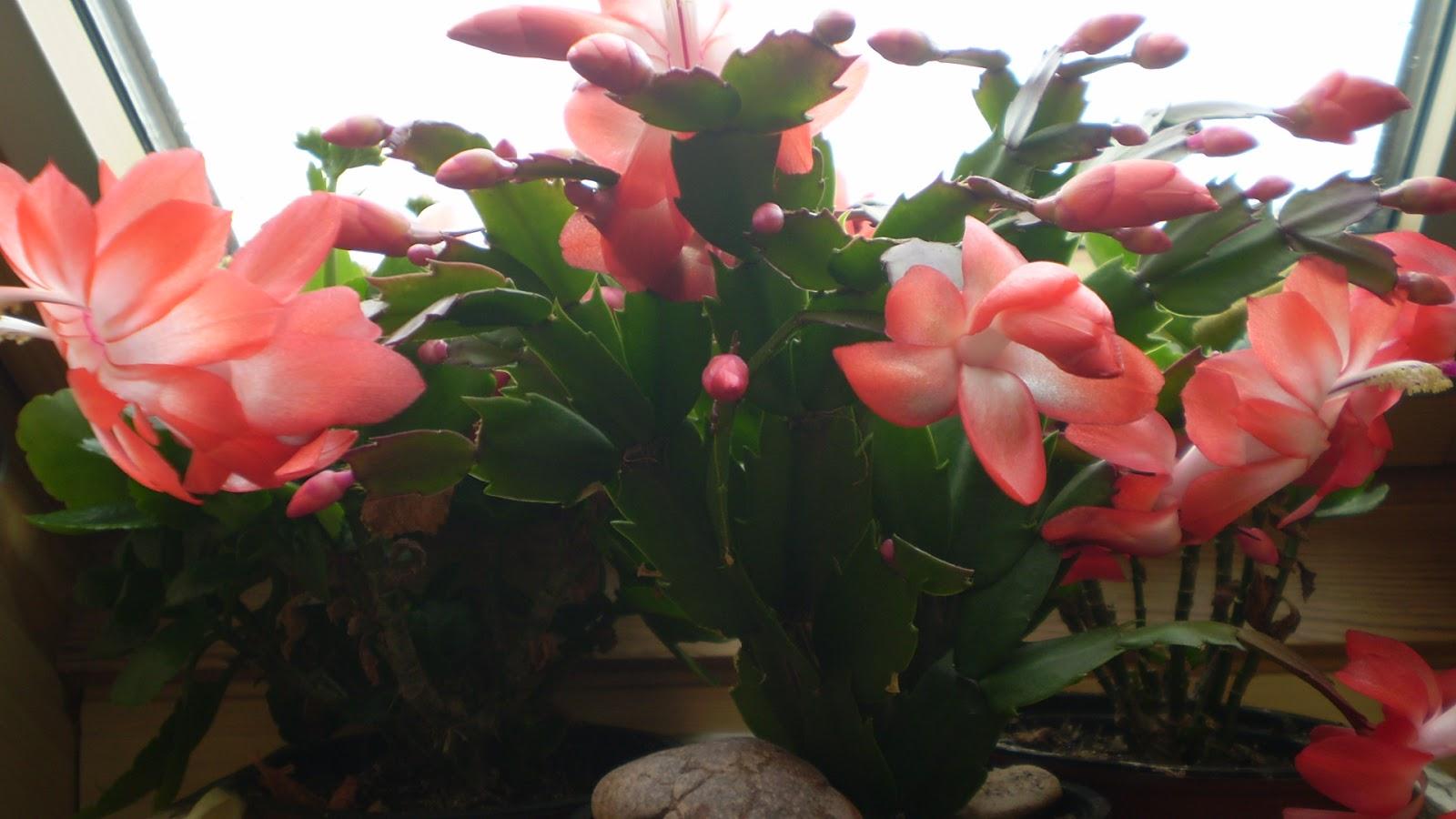 El jardinero urbano - El jardinero en casa ...