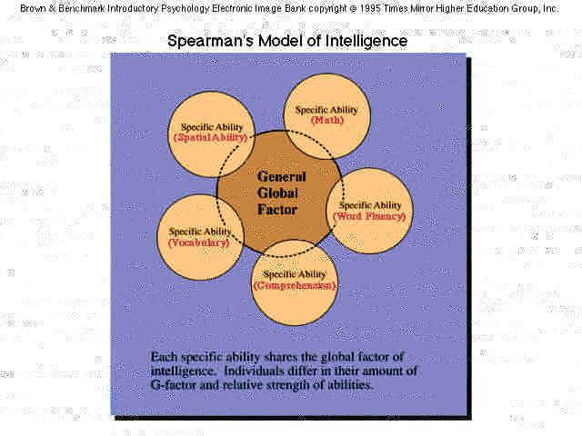 similarities of sternberg spearman and gardner In his theory, spearman formulated the following postulates: 1) intelligence is not dependent on other personality feature of an individual 2) intelligence.