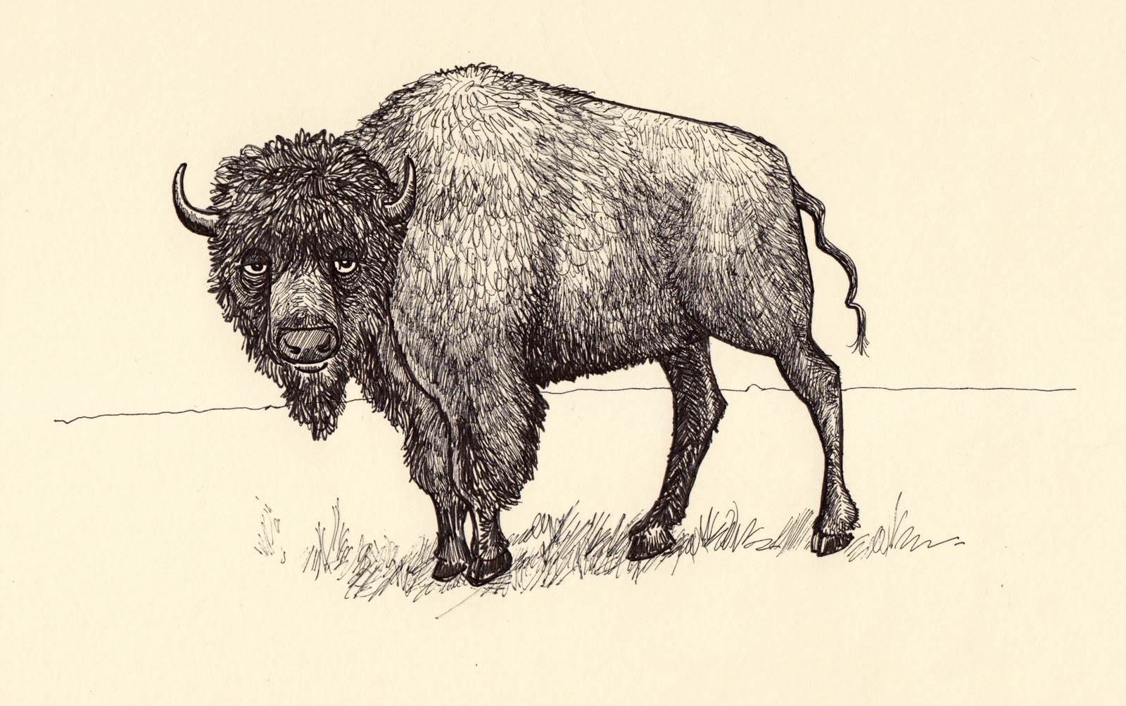 how to draw a bison buffalo