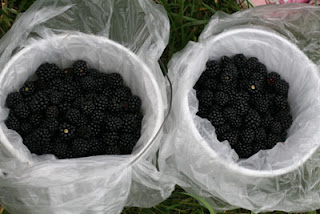 blackberries2.jpg