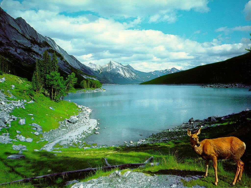 Nature wallpaper backgrounds free images fun - Natures wallpapers for desktop ...