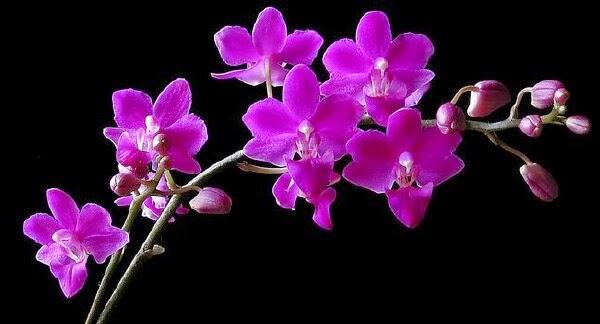 ảnh hoa đẹp nhất thế giới