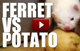 Dog Eats Chicken Bones Diarrhea