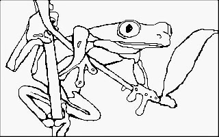 Ausmalbilder Frosch Kostenlos
