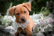 Posted by Vinda Ho t Labels: cute dog, dog backgrounds, dog pictures, .