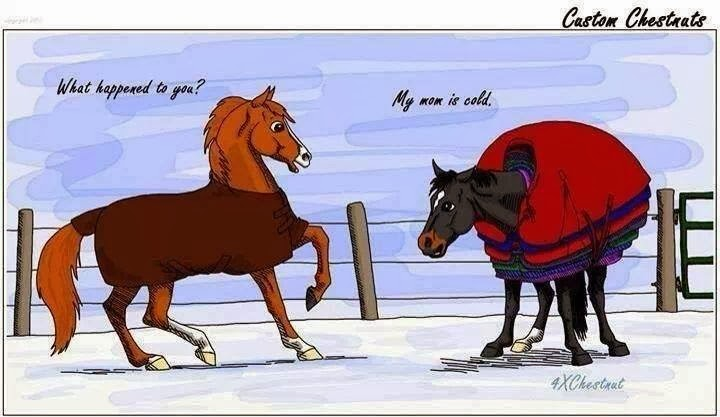 Rantings Of A Horse Mom January 2014