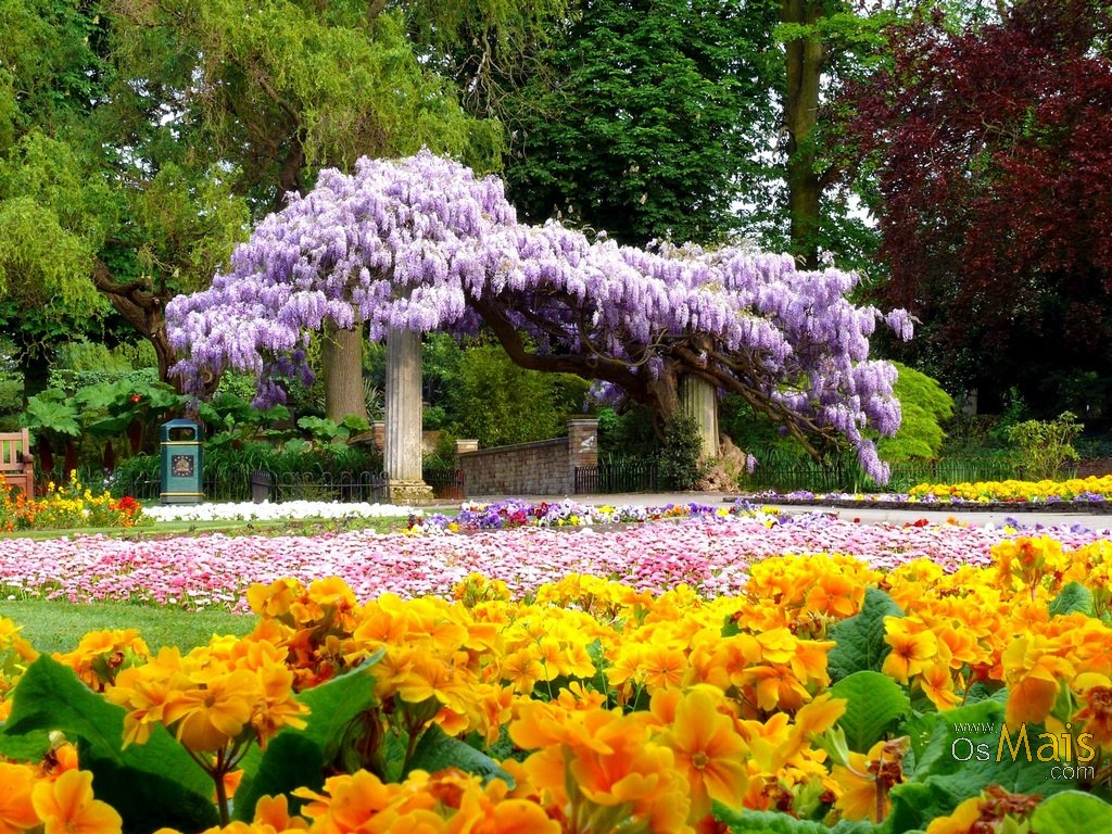 imagens jardim florido:Wisteria Arches and Trees