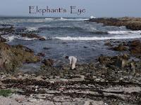 Current post at Elephant's Eye on False Bay (click image for link)