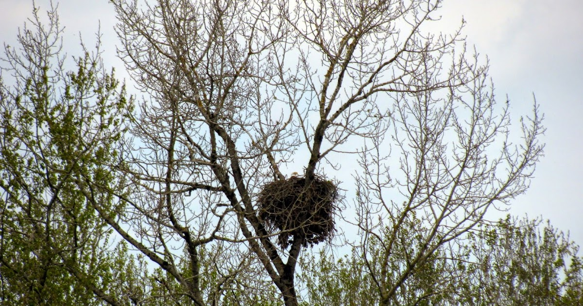 eagle nest buddhist single women Egg seems to have disappeared from eagles' nest at  the progress on the alcoa nest liberty laid another single egg on the  for woman beaten, held.