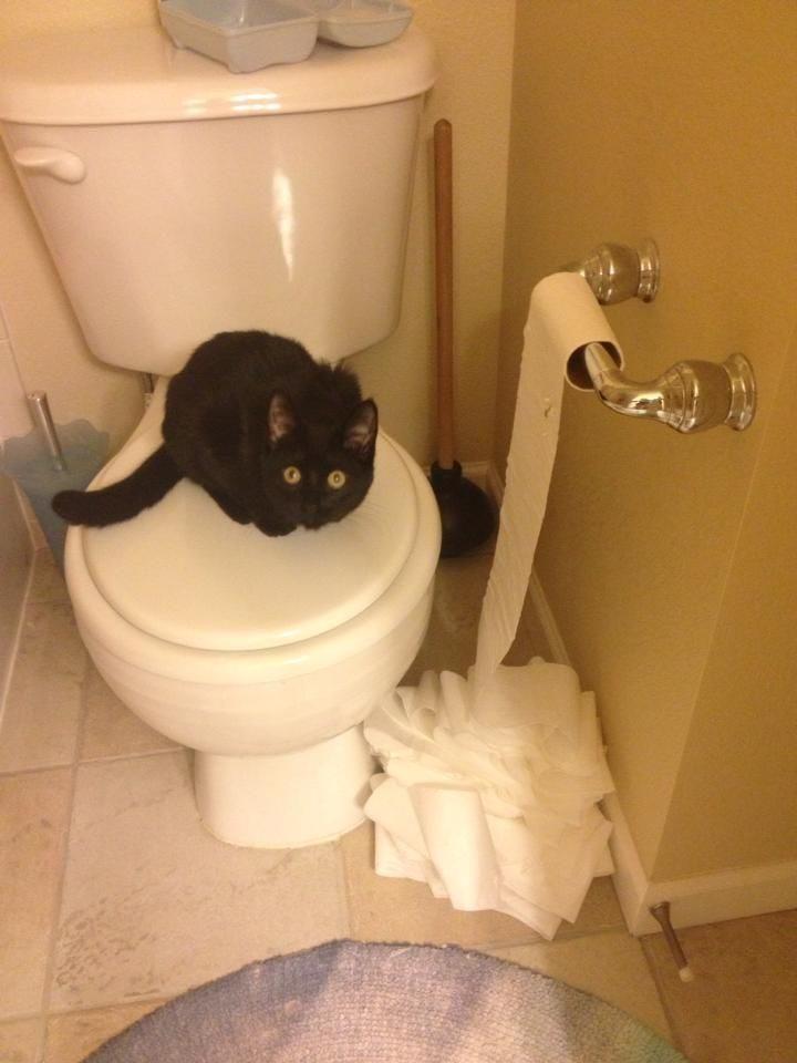Кота застукали за грязным делом