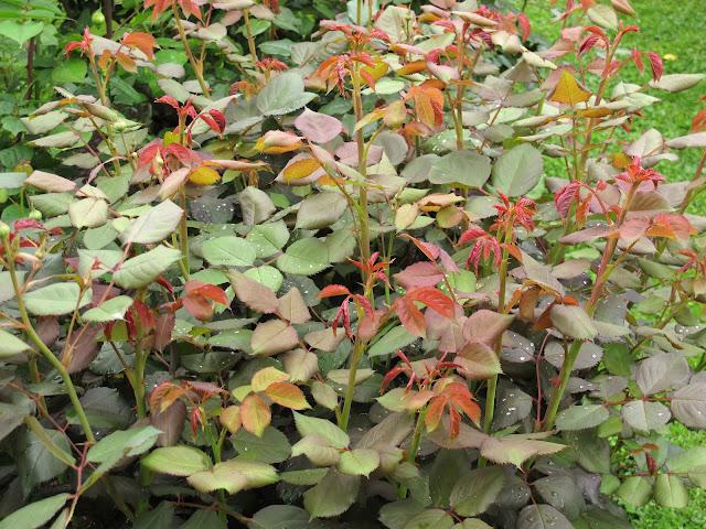 Plantas no florecen jardineria