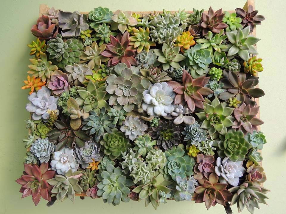 aprender como fazer um Quadro Vivo ou Jardim Vertical de Suculentas