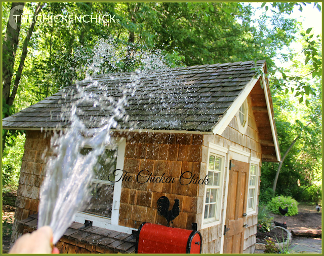 Hose down the roof of the coop and areas around the coop frequently to facilitate evaporative cooling.