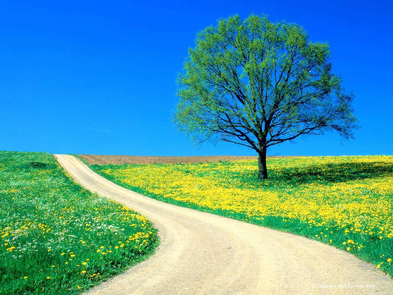 http://1.bp.blogspot.com/-NMPPejmLvZQ/TyBRcuce6wI/AAAAAAAADwk/1VcR2bdx3M4/s1600/Landscape_HD_Nature_Wallpapers_For_desktop_and_mobile+%252816%2529.jpg