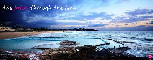 the lotus through the lens