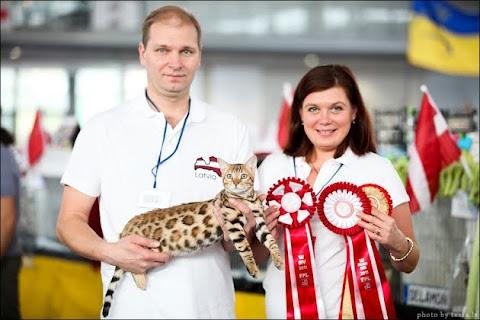 Всемирная выставка.                 Наш котёнок стал лучшим бенгальским котёнком и был номинирован.