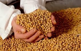 O Mercado da Soja em 2014