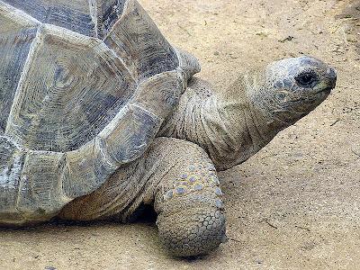 tortoise 7 Binatang Yang Hidup Ratusan Tahun