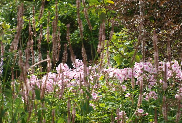 Blomstrende have i sensommeren