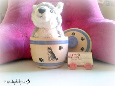 pottery dog bowls