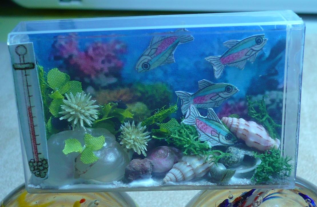 A small hearts desire tic tac fish aquarium for Small tropical fish tank