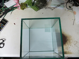 Empty clear cube ready to make a terrarium