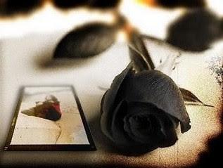 bunga cantik mawar hitam