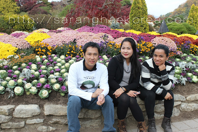 Chrysanthemums and fall foliage festival at the garden of the morning calm