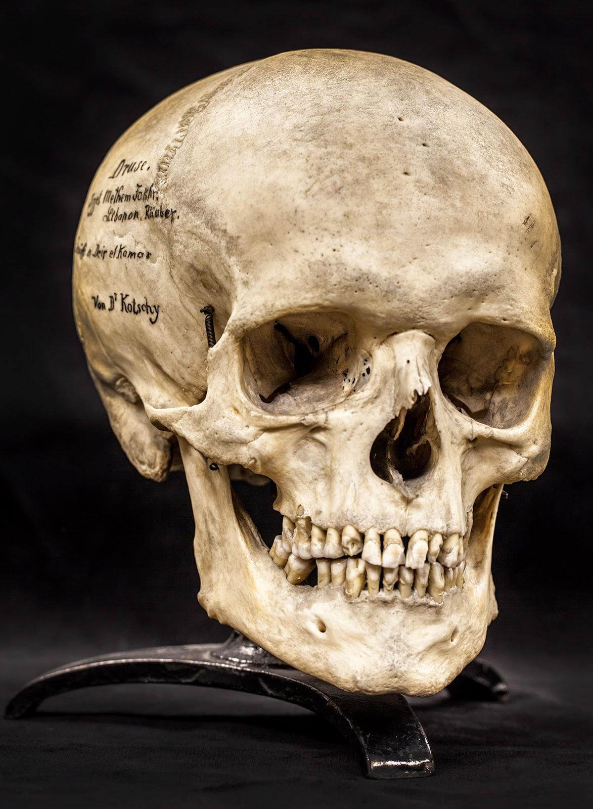 Ciencias de Joseleg: El cráneo humano