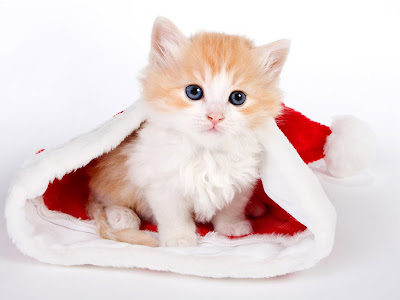 foto kucing lucu 07