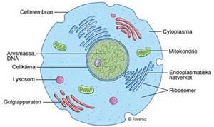 vad består celler av