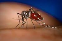 Traditional herb medicine Dengue Fever