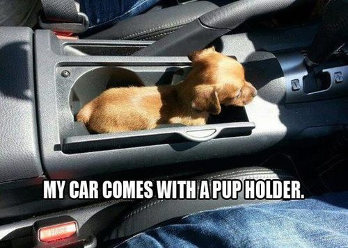 My car comes with a pup holder.