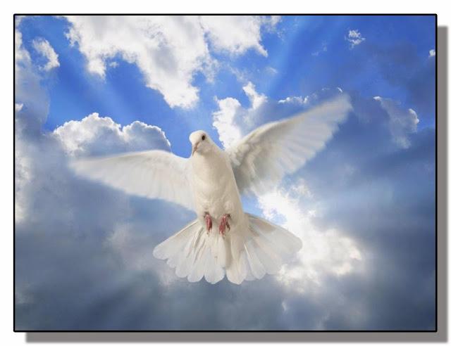 La Paz del ser humano