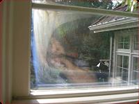 Seattle foggy window failure repair
