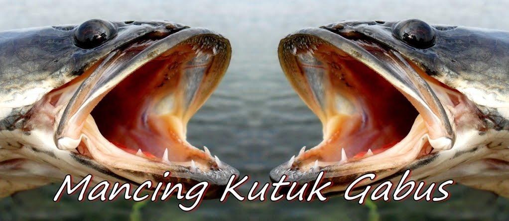 MANCING KUTUK / GABUS