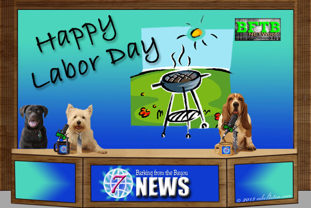 Labor Day newscast with Labrador, Westie and Basset