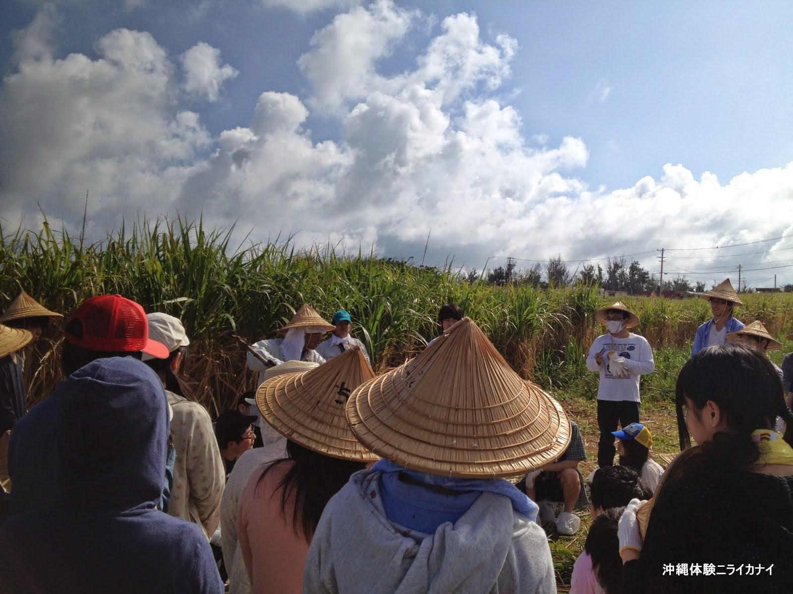 体験/観光 沖縄修学旅行 サトウキビ