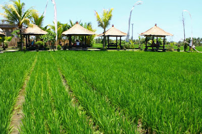 Eating at Rice field experience at Bebek Joni, Ubud