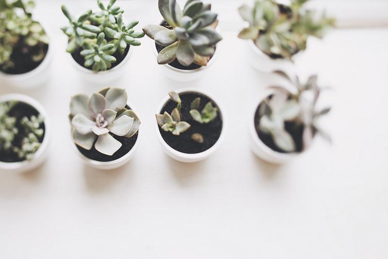 Plants, Green, Shrubs, Olivia Rae James