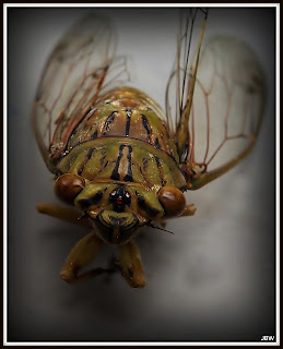 Cicada, change,life,essence