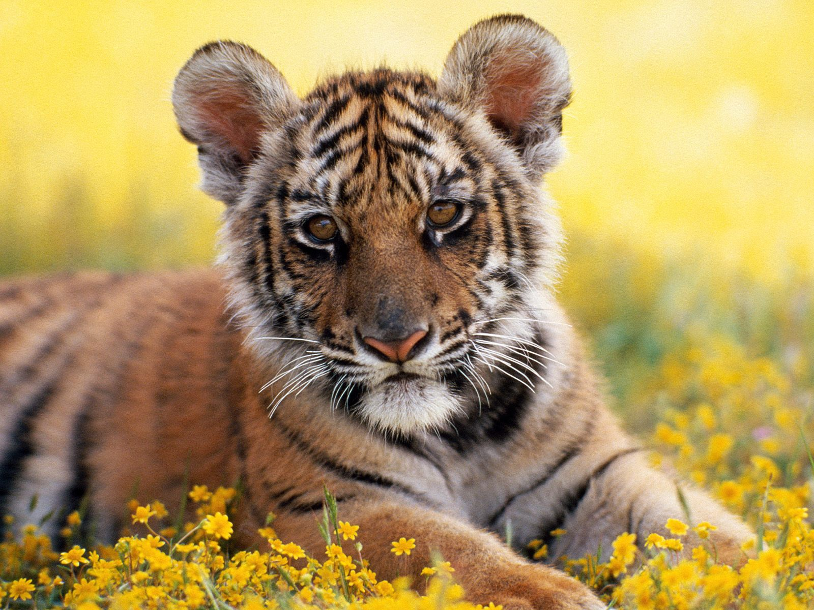 Best Animal Hd Wallpapers