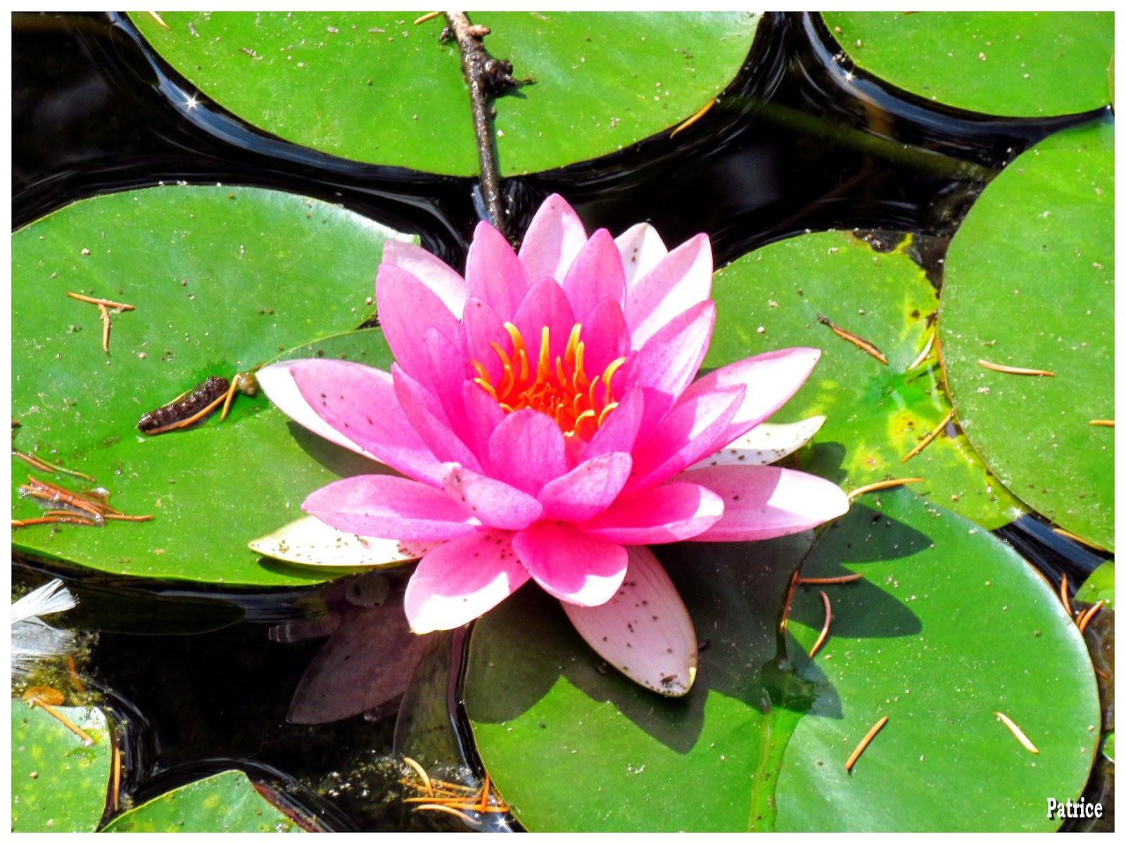 Blog photos de patrice balade la tronche grenoble - Bassin jardin japonais grenoble ...
