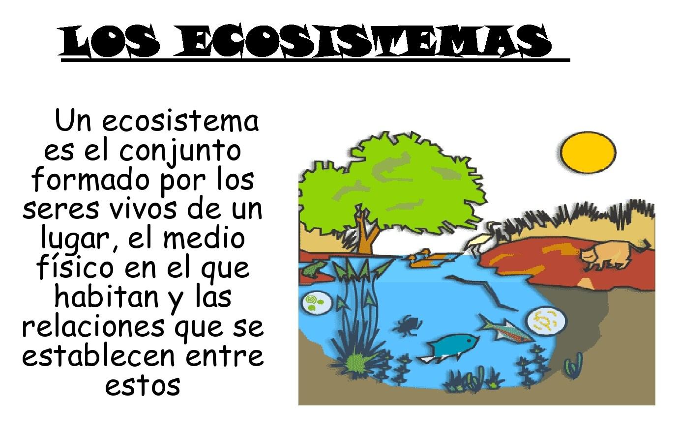 Puzzle de ecosistema de isabella , rompecabezas de