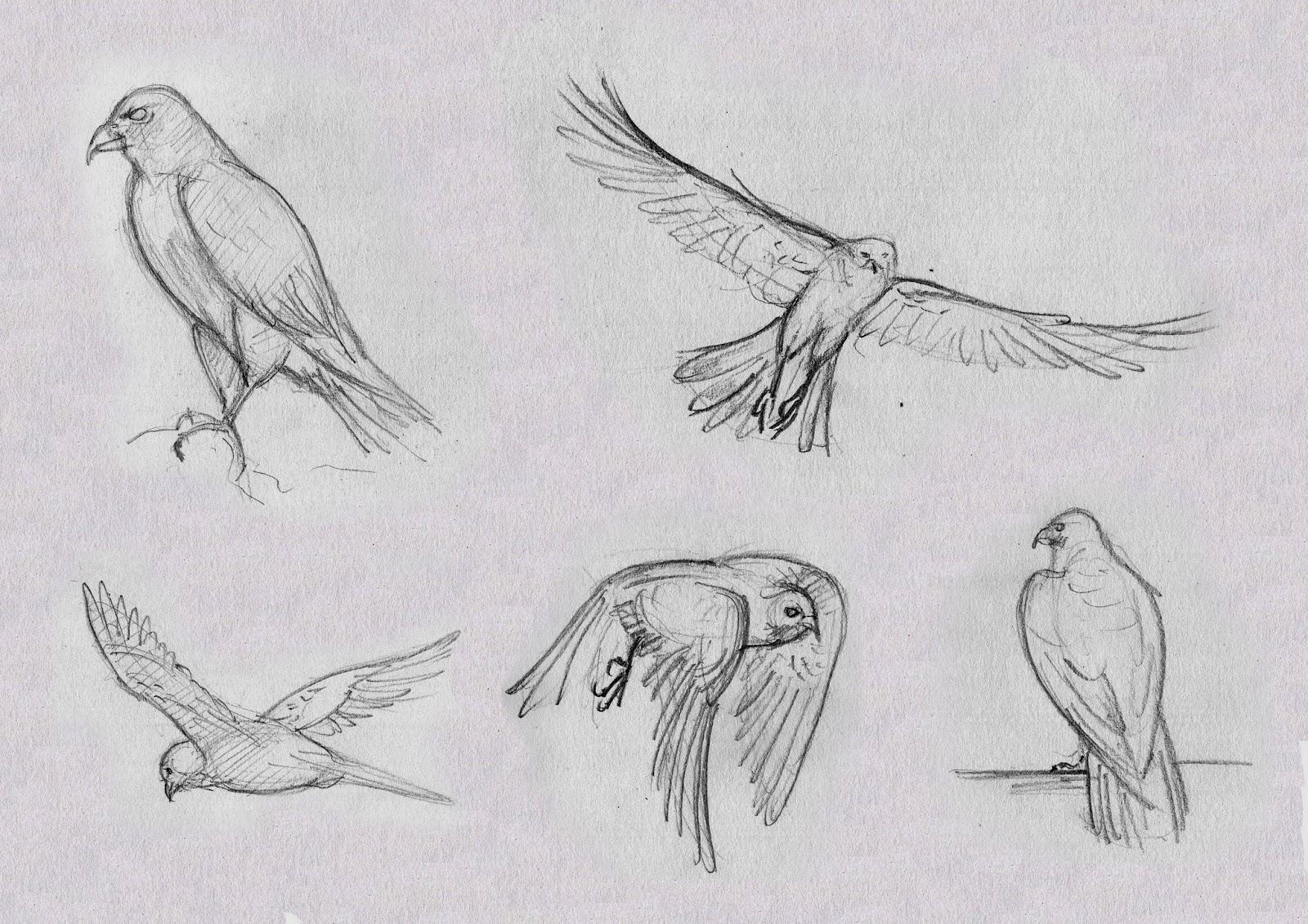 Pierre labarre dessins d 39 observation d 39 animaux - Dessin d animaux ...